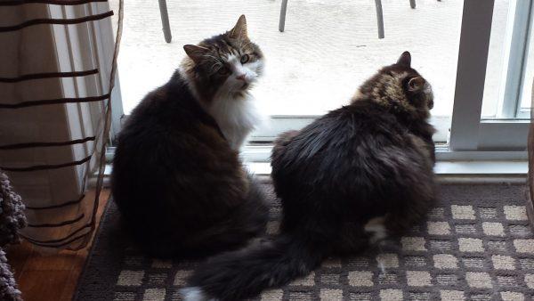 Skitter and Romeo