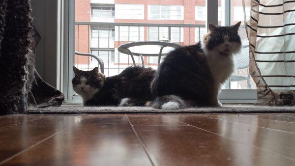 Romeo and Skitter