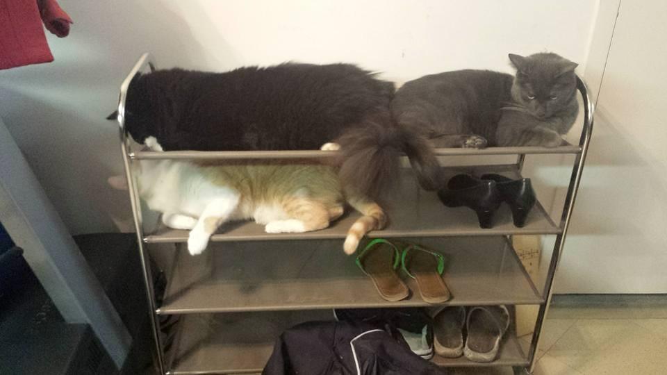 Shoe Rack?? You mean Cat Hammock!