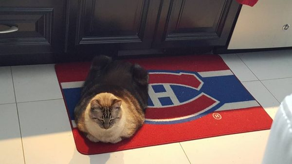 Cliquot - the furriest of Habs fans!