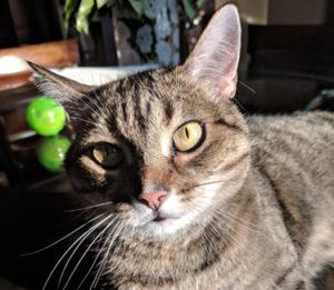 West Island Cats Testimonials - Cleo