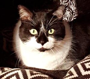 West Island Cats Testimonials - Rocky