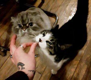 Human & Amy